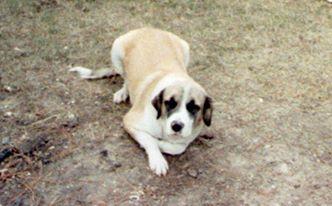 My old dog, Prince